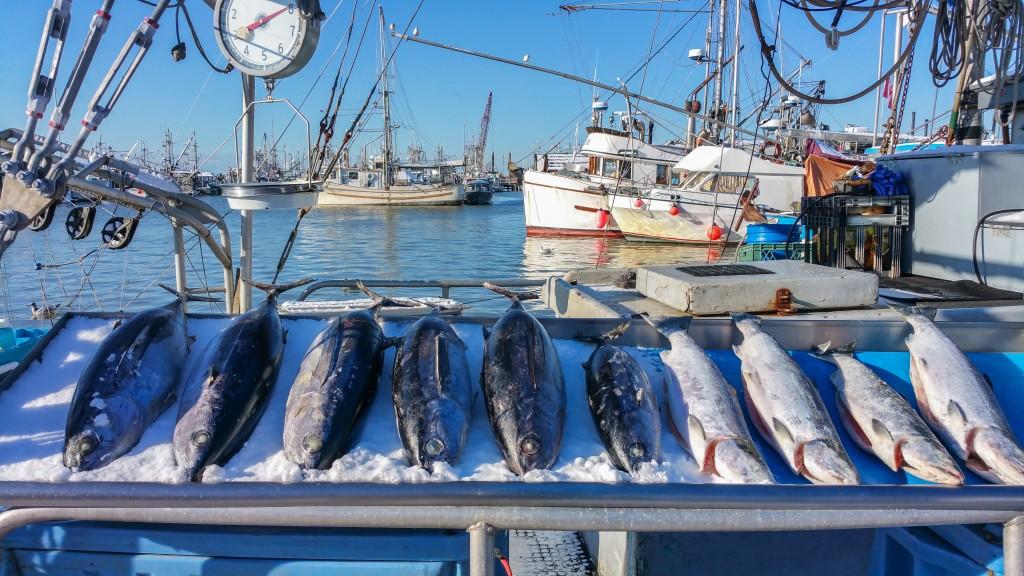pesca ilegal 2