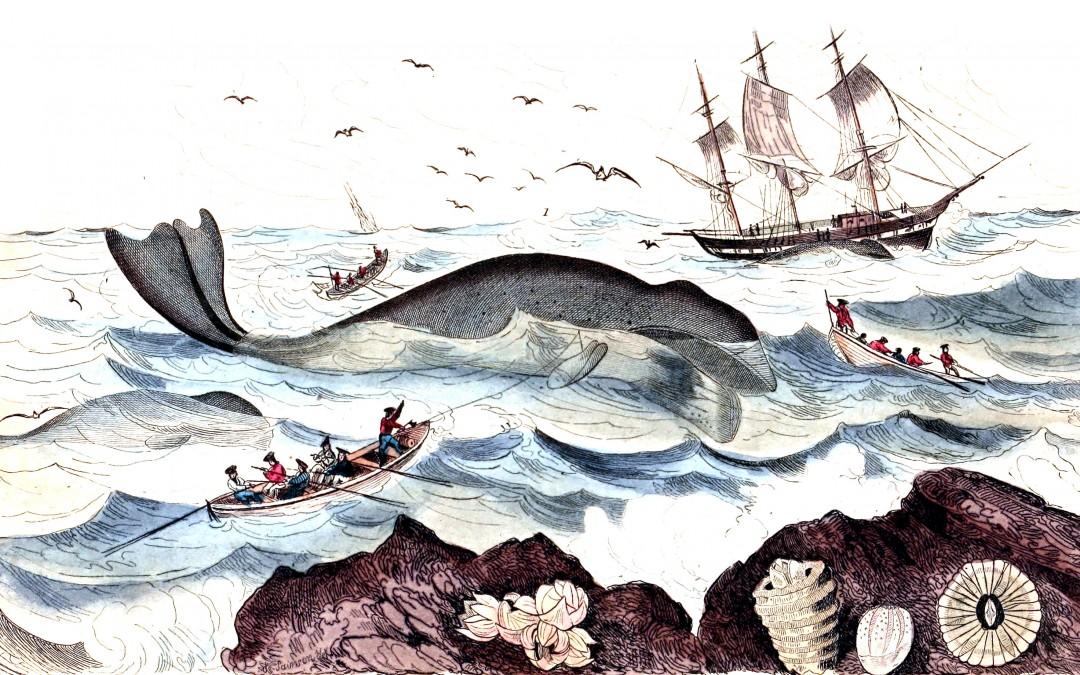 La captura de ballenas en el Cantábrico